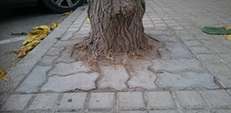 drevo-neurejeno-1