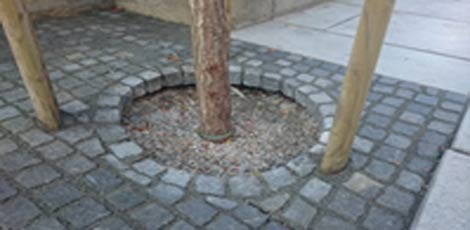 drevo-neurejeno-3